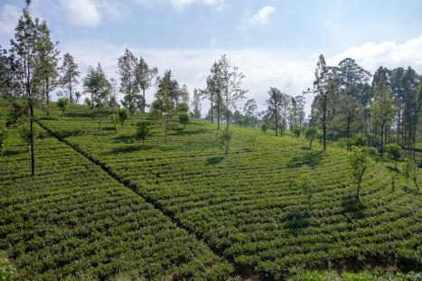 srilanka-24