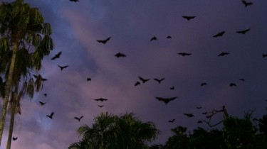 bat video